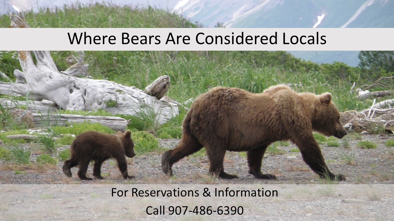 PHOTO GRAPHIC Bears are Locals